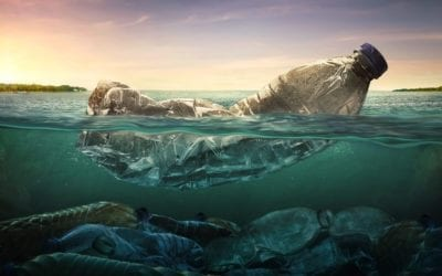 FIVE REASONS WHY WE MUST PROTECT THE OCEANS